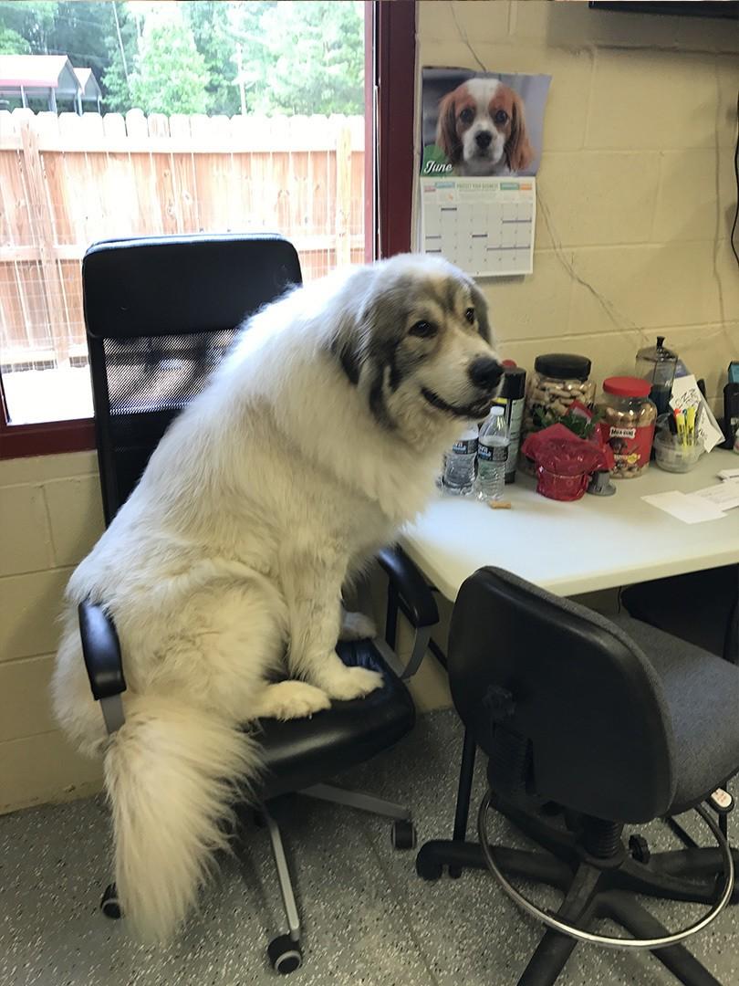 dog on chair - IMG0523